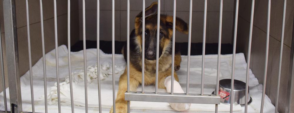 Animo dierenartsen: hospitalisatie kleine huisdieren