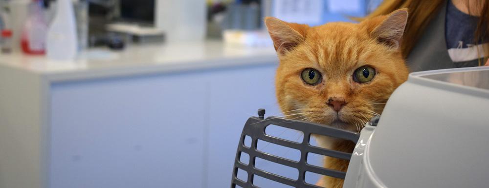 Animo dierenartsen: check hart- en longfunctie