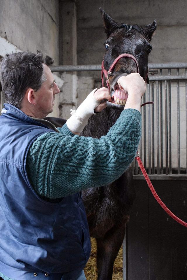 Animo: tandverzorging paarden