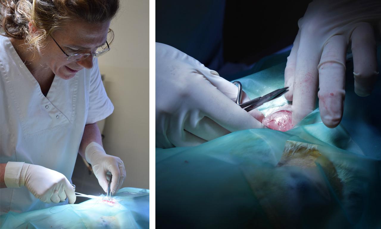 Animo: Operatie Veerle Durnez